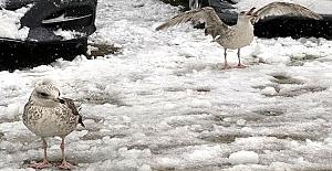 Fulya Omaç'ın gözünden İstanbul'dan kar manzaraları
